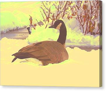 Canvas Print featuring the pyrography Canadian Goose by Larry Campbell