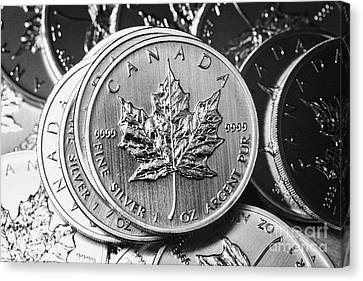 Canadian One Ounce Maple Leaf Silver Coins Canvas Print