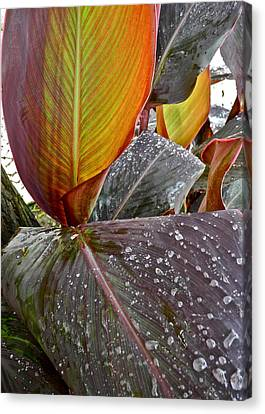 Canna Lily I  Canvas Print by Kirsten Giving
