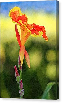 Canna Lily Canvas Print by Karen Adams