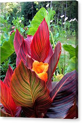 Canna Lily Stripes Canvas Print by MTBobbins Photography