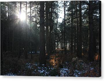 Canvas Print featuring the photograph Cannock Chase by Jean Walker
