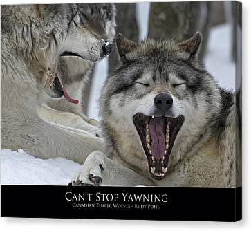 Can't Stop Yawning Canvas Print by Rudy Pohl