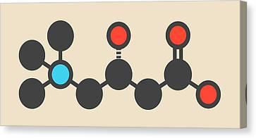 Carnitine Food Supplement Molecule Canvas Print by Molekuul