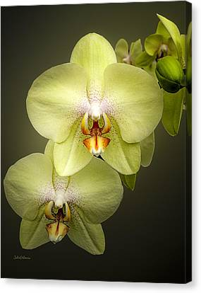 Cascade Of Yellow Orchids Canvas Print by Julie Palencia