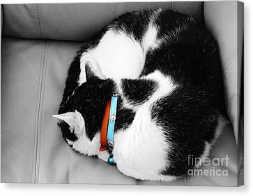 cat Canvas Print by Bobby Mandal