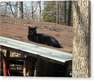 Canvas Print featuring the photograph Cat On A Tin Roof by Wendy Coulson