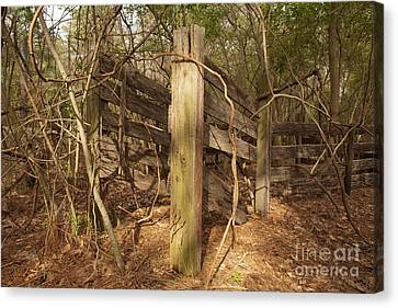 Catchpen Canvas Print by Russell Christie