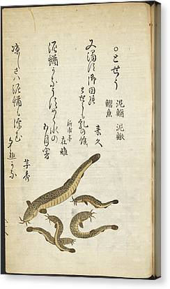 Catfish Canvas Print by British Library