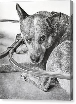 Cattle Dog Relaxing Canvas Print