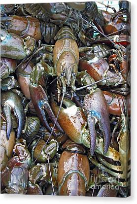 Caught Crayfish Canvas Print by Bjorn Svensson