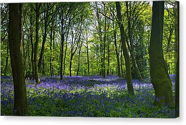 Chalet Wood Wanstead Park Bluebells Canvas Print