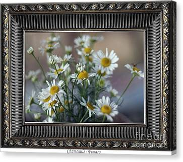 Chamomile Canvas Print by Pemaro