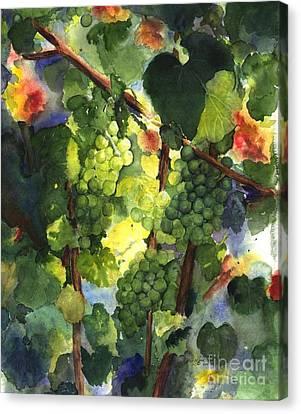 Vineyard In Napa Canvas Print - Chardonnay Au Soliel by Maria Hunt