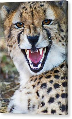 Canvas Print featuring the painting Cheetah With Attitude by Stanza Widen