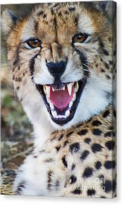 Cheetah With Attitude Canvas Print