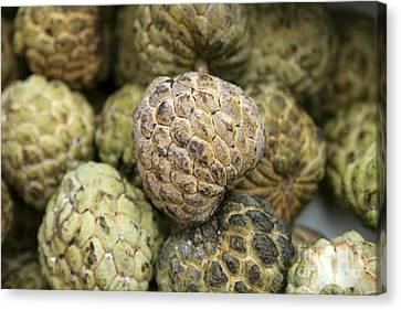 Cherimoya Fruit Annona Cherimola Canvas Print