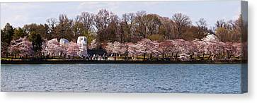 Cherry Blossom Trees Near Martin Luther Canvas Print by Panoramic Images
