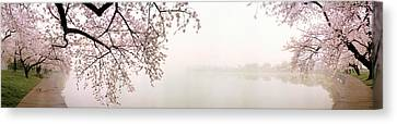 Cherry Blossoms At The Lakeside Canvas Print by Panoramic Images