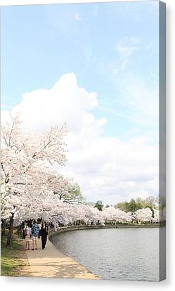 Cherry Blossoms - Washington Dc - 01131 Canvas Print by DC Photographer