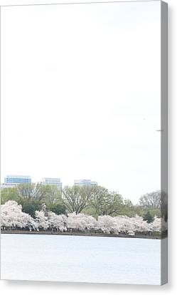 Jefferson Canvas Print - Cherry Blossoms - Washington Dc - 011318 by DC Photographer