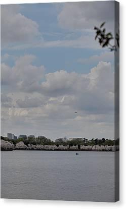 Cherry Blossoms - Washington Dc - 011325 Canvas Print by DC Photographer