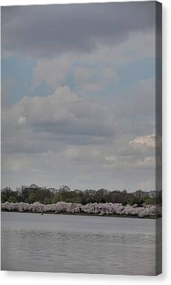 Cherry Blossoms - Washington Dc - 011334 Canvas Print by DC Photographer