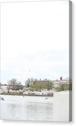 Cherry Canvas Print - Cherry Blossoms - Washington Dc - 01138 by DC Photographer