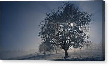Cherry Tree On A Snow Covered Canvas Print by Panoramic Images