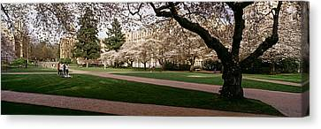 Cherry Trees In The Quad Canvas Print by Panoramic Images