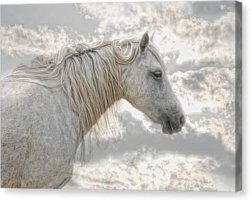 Wild Horse Canvas Print - cheval de la Camargue by Joachim G Pinkawa