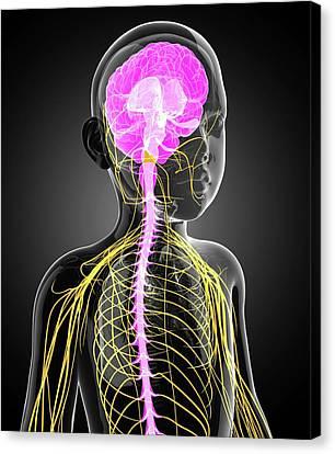 Child's Central Nervous System Canvas Print by Pixologicstudio