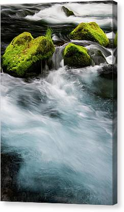 Chile South America Moss-covered Canvas Print by Scott T. Smith