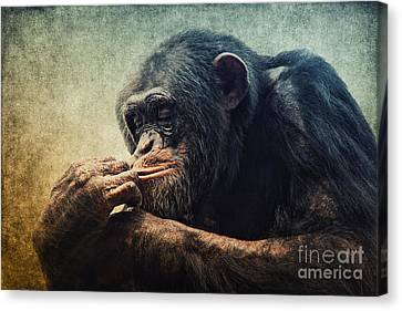 Chimpanzee Canvas Print by Angela Doelling AD DESIGN Photo and PhotoArt