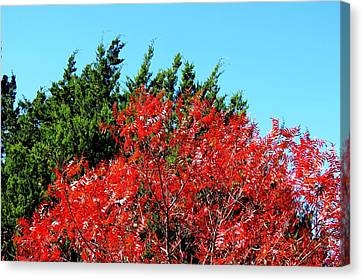 Canvas Print featuring the photograph Christmas Color by David  Norman