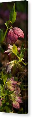 Close-up Of Purple Flowers Canvas Print by Panoramic Images