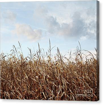 Canvas Print featuring the photograph Closeup Of Corn Stalks  by Sandra Cunningham