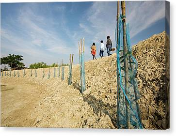 Coastal Flood Defences In The Sunderbans Canvas Print