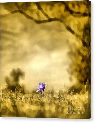 Colchicum Autumnale  Canvas Print by Odon Czintos