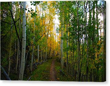 Colorado Fall Hike Canvas Print