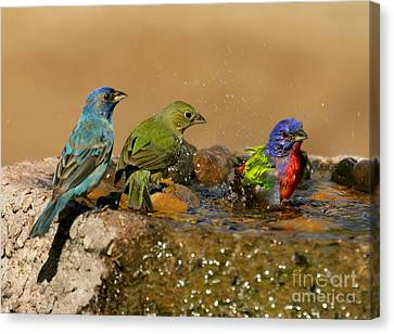 Colorful Bathtime Canvas Print