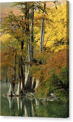 Colorful Cypress Canvas Print by Robert Anschutz