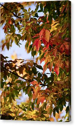 Colorful Leaves Canvas Print by Gloria Pasko