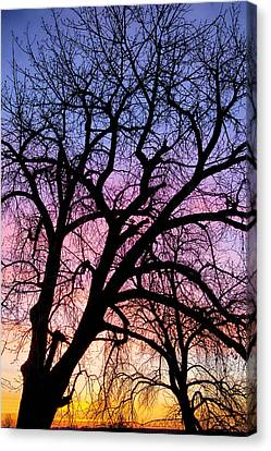 James Insogna Canvas Print - Colorful Tree by James BO  Insogna