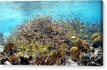 Colorful Tropical Reef Canvas Print