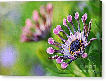 Colors Of Spring Canvas Print by Darren Fisher