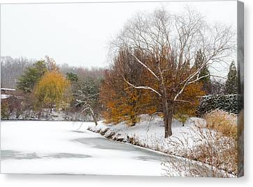Colors Of Winter Canvas Print by Julie Palencia
