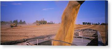 Combine Harvesting Soybeans In A Field Canvas Print
