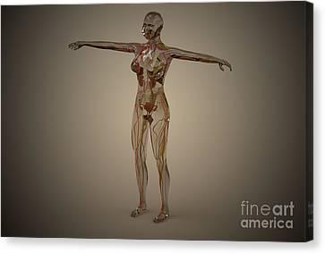 Conceptual Image Of Human Nervous Canvas Print by Stocktrek Images