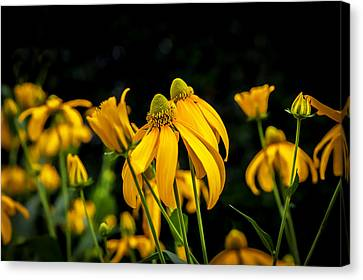Coneflowers Echinacea Yellow Painted Canvas Print by Rich Franco